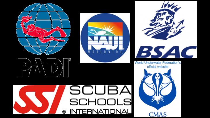 【ライセンス(Cカード)取得】スキューバダイビングの指導団体って?国内主要9団体を紹介!